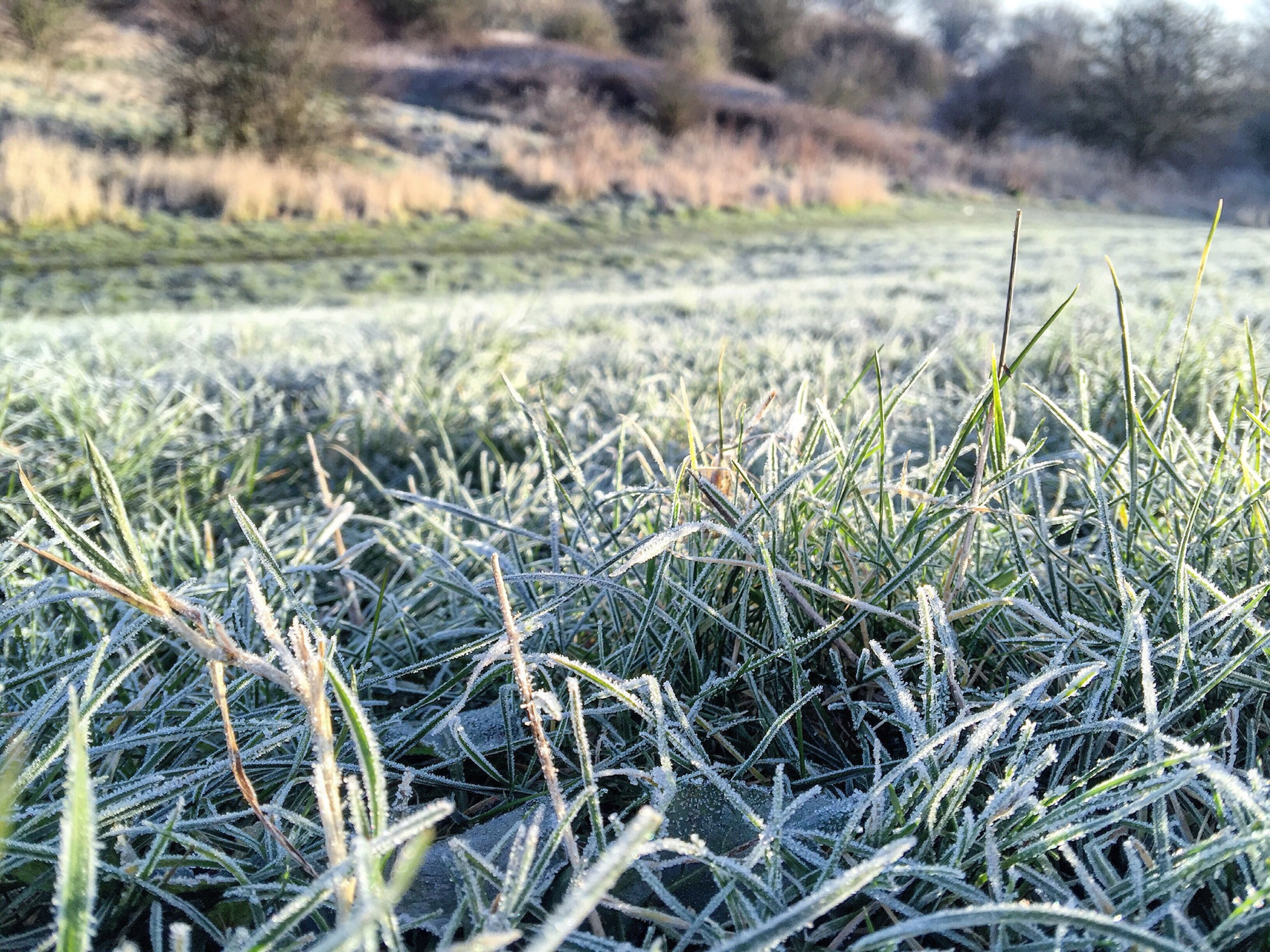 A beautiful, cold morning this morning. Walk Taking Photos Sunny Day England Cold Britishweather Morning Grass No People