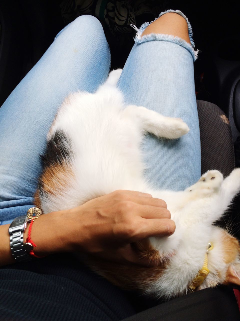 Cat Relaxing On Woman Lap At Home