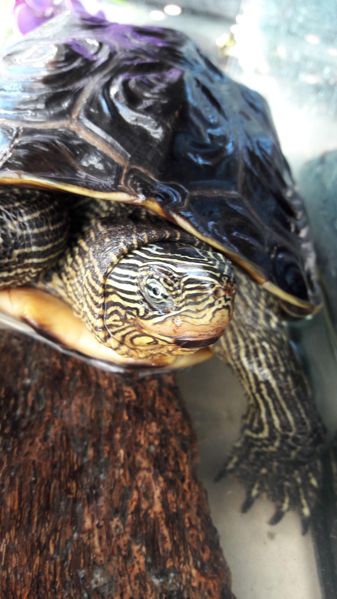 Animal Themes Tortuga Tortue Tortugas♡ Animals In The Wild Sea Turtle Animal Wildlife Animal Shell Tortoise Turtle