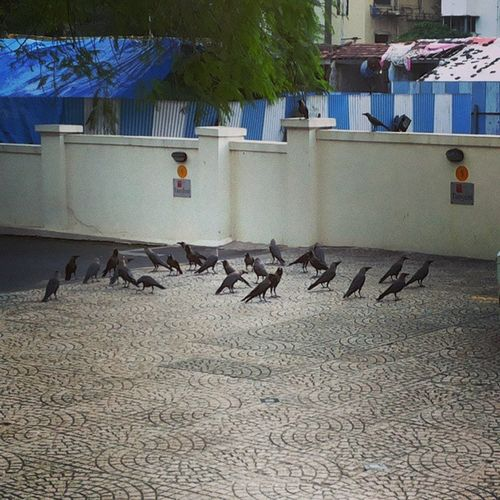Random Click Samsung GalaxyGrand crows meeting lolz xoxo instalike instamood instafun instapic mumbai worli