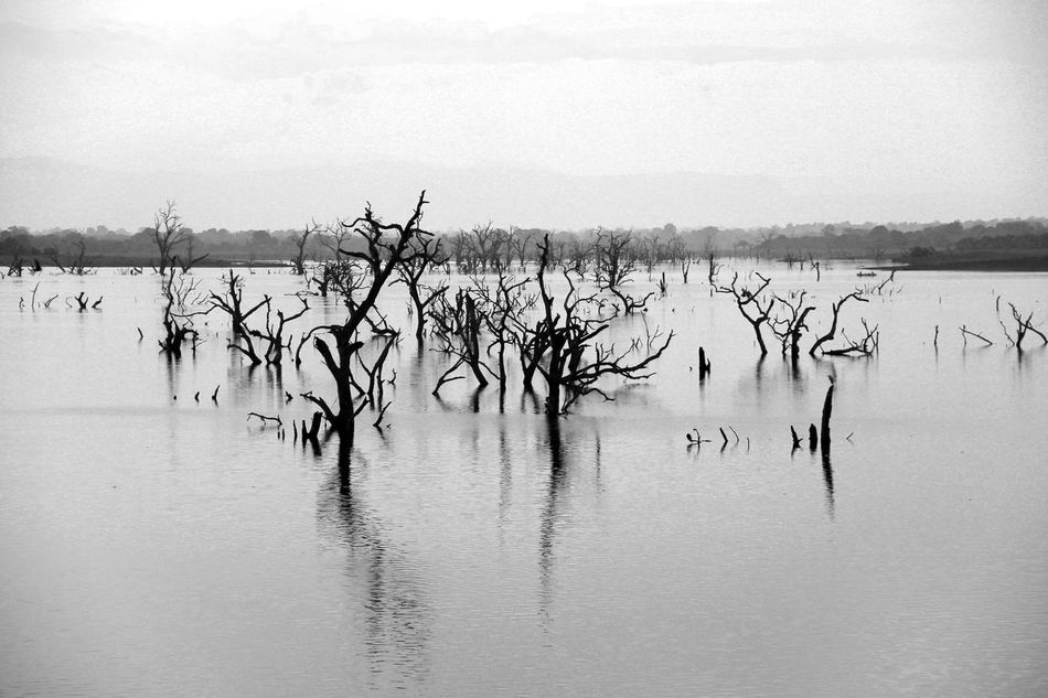 A morning in Udawalawe Nationalpark in Sri Lanka. This is a water reservior which looks scary and fascinating at the same time. Abandoned Bare Tree Beauty In Nature Black And White Blackandwhite Lake Loneliness Monochrome National Park Nature Nature_collection Naturelovers No People Outdoors Sky Sri Lanka Tranquility Travel Travel Photography Udawalawe National Park Water @team