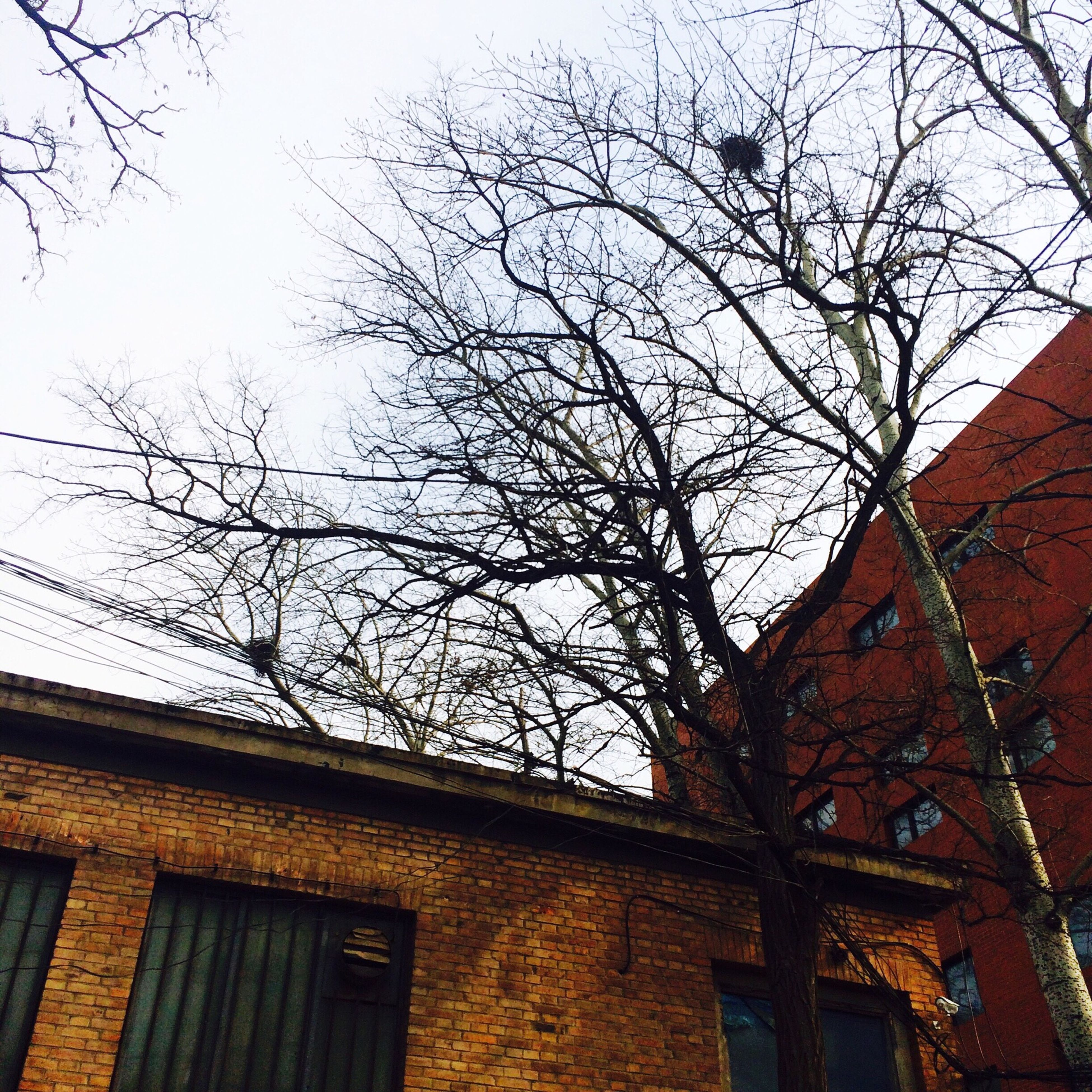 building exterior, architecture, built structure, low angle view, bare tree, tree, branch, residential building, residential structure, house, sky, window, building, clear sky, outdoors, day, no people, city, roof, high section