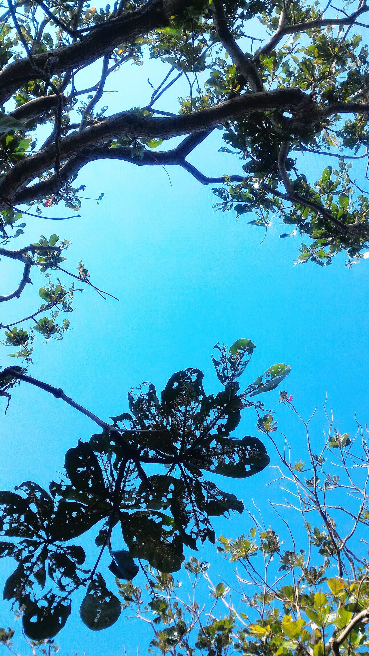 LOVE Tree Sky Close-up Beauty In Nature Day 愛 My Country In A Photo Trees