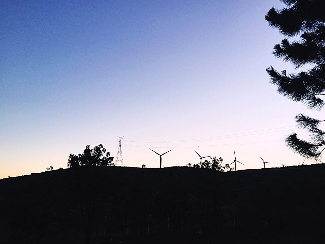 silhouette, copy space, low angle view, clear sky, no people, tree, fuel and power generation, sunset, nature, alternative energy, wind power, wind turbine, outdoors, day, windmill, technology, sky, industrial windmill, beauty in nature, palm tree