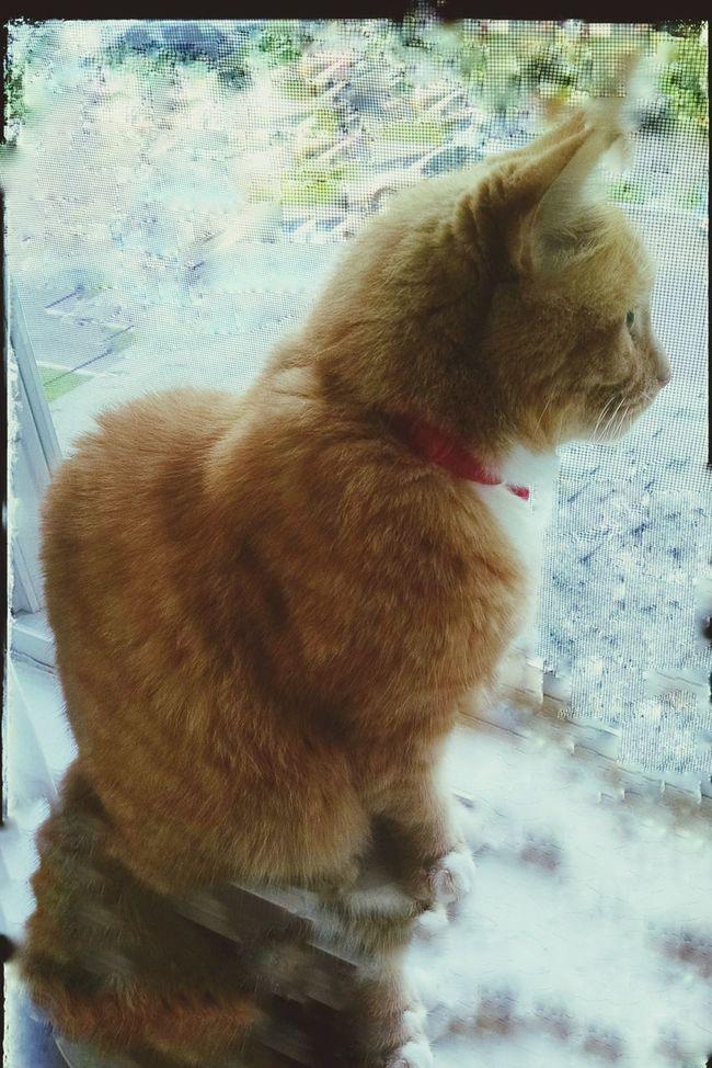 Cat♡ waiting for karen Infinite Sadness Missing Her