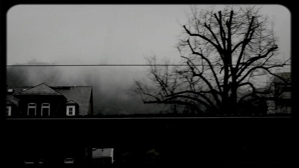 Treetastic Gotham Filter Travel Photography Gloomy Nowhere