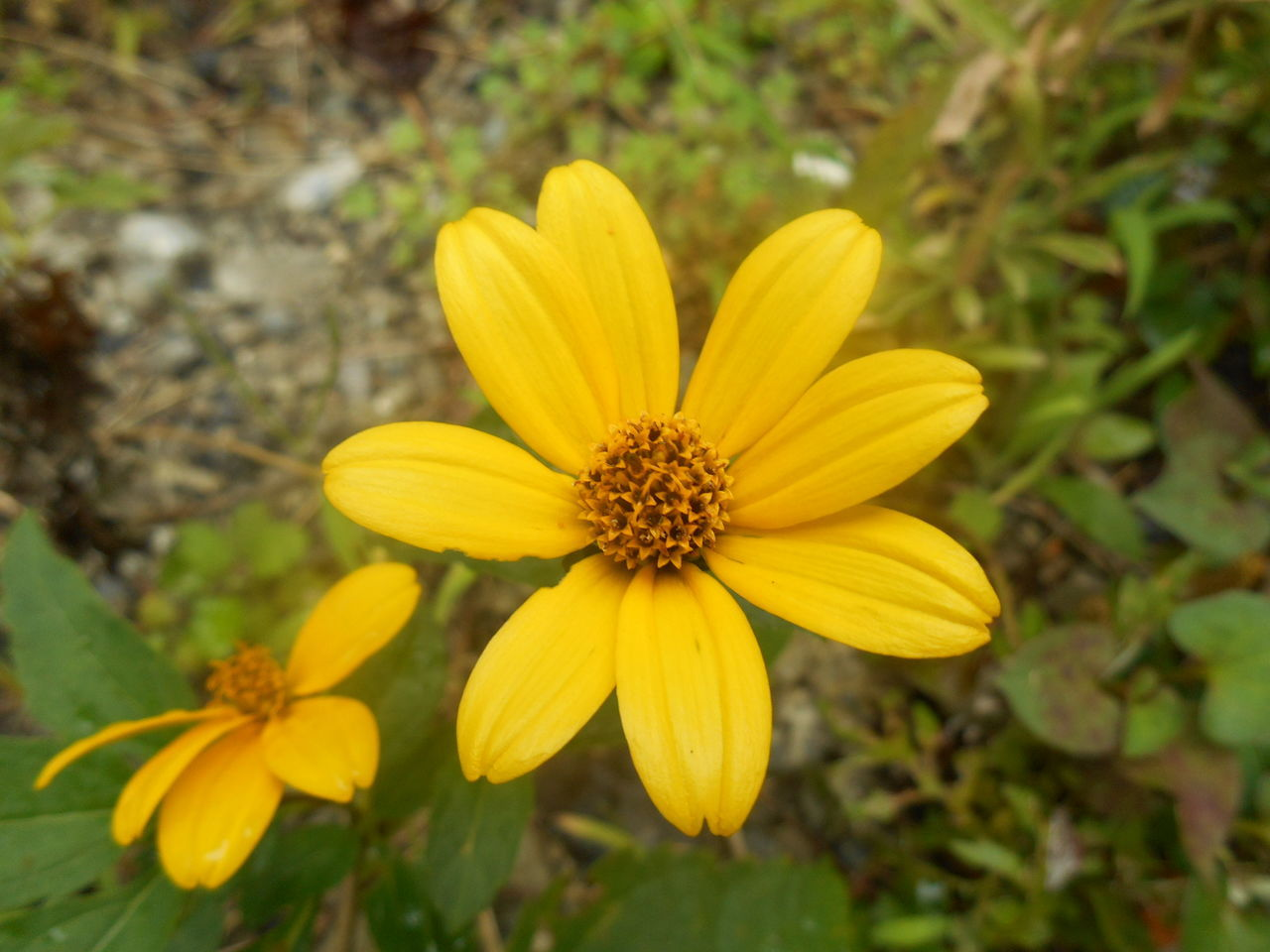 flower, petal, fragility, growth, nature, yellow, flower head, freshness, plant, beauty in nature, blooming, no people, close-up, outdoors, day