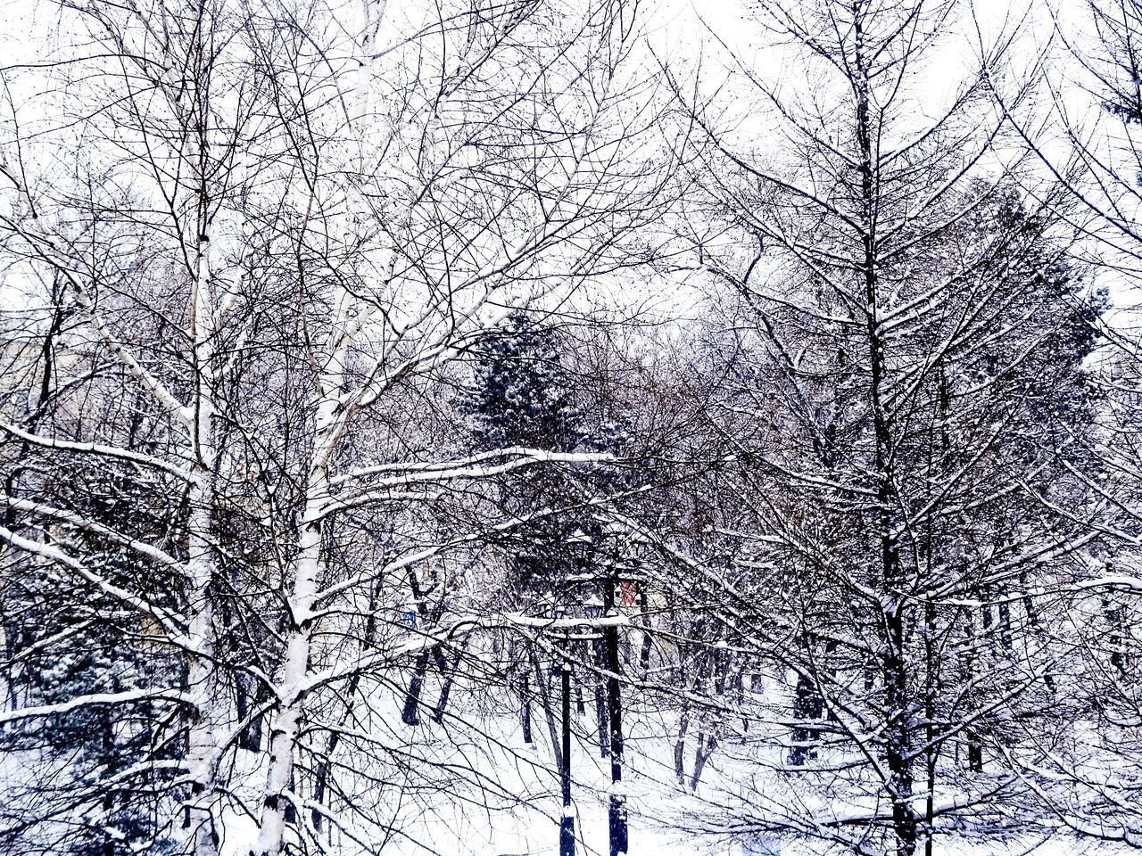 tree, winter, bare tree, snow, cold temperature, branch, nature, forest, beauty in nature, low angle view, day, no people, outdoors, frozen, snowing, sky