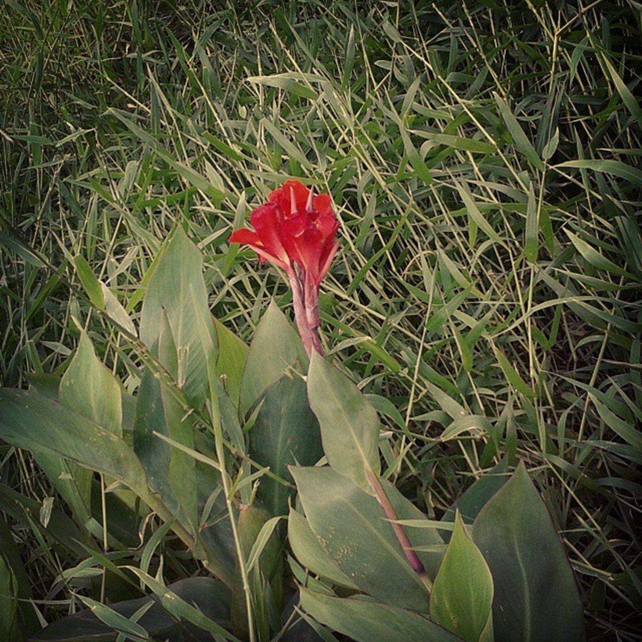 Ela era a solitária entre taaaanto mato...Flor Natureza Amoanatureza