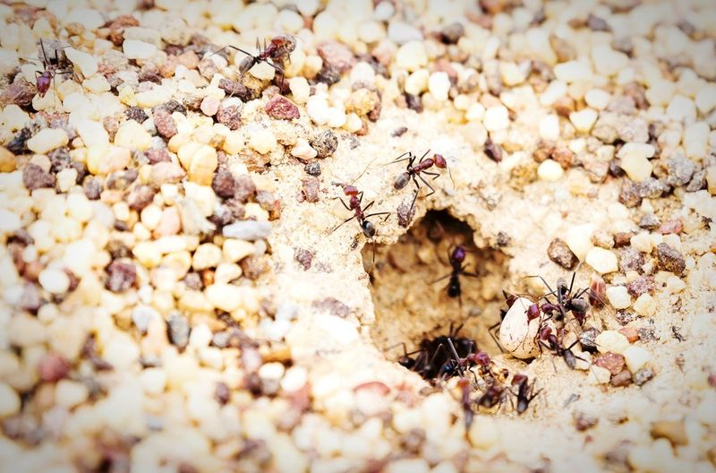 Ants can lift objects up to 50 times their bodyweight! Ants Nature Strength Will Cooperation Team Australia Bouddi National Park RePicture Leadership