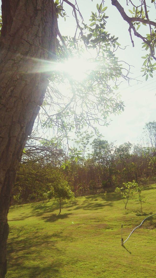 Paisagemlinda Paisagensdetirarofolego NaturezaMaravilhosa Verde