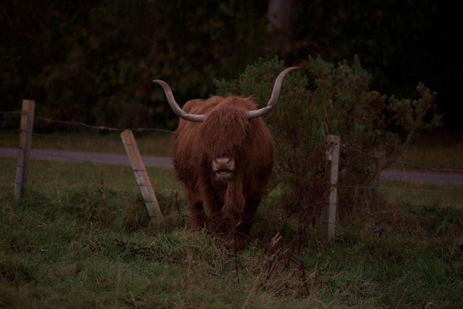 Beautiful stock photos of buffalo,  Animal Themes,  Buffalo,  Day,  Domestic Animals