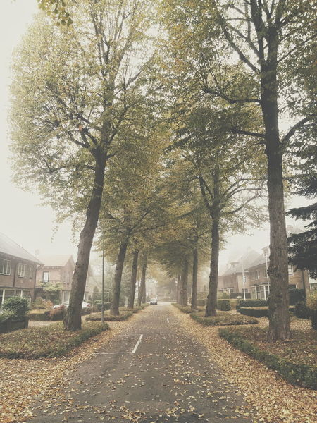 Fall Autumn Place To Be  Netherlands Trees Sky Outdoors Beauty In Nature Day No People Tree Nature House Home Breda Building Exterior Built Structure Lifestyles Place To Be  Mist Street