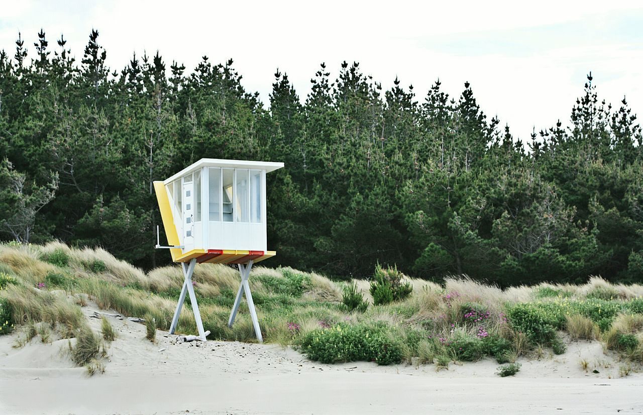 Woodend Beach, Canterbury - New Zealand Trees Forest WoodLand Beach Outdoors Nature No People By The Sea Seaside On The Seashore Lifeguard Tower Lifeguard Hut Beach Photography NZ South Island Nzsouthisland Nz Beach New Zealand Natural New Zealand Photography New Zealand Impressions New Zealand Landscapes NZ :)