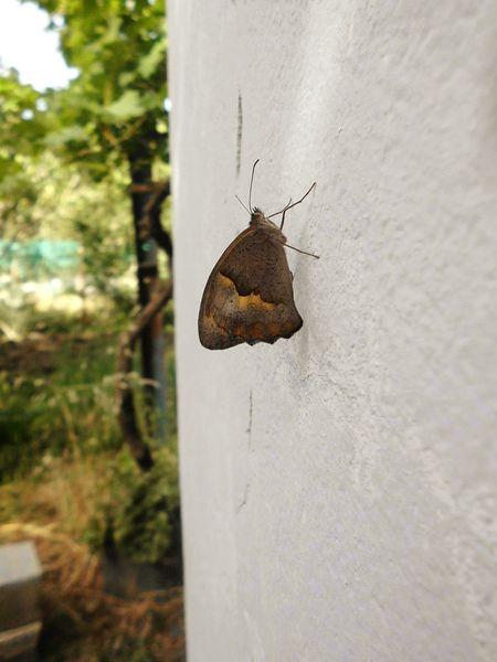 Betterfly Nature EyeMe Bestshot