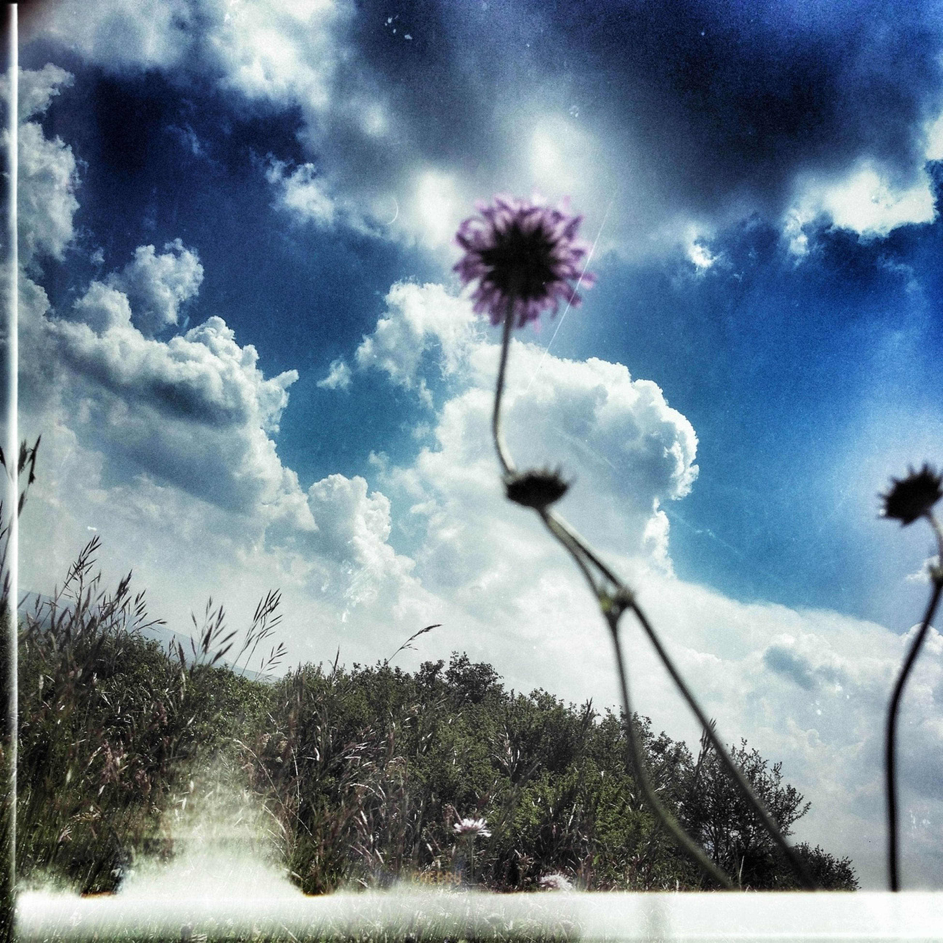 flower, sky, fragility, cloud - sky, freshness, growth, beauty in nature, stem, nature, low angle view, cloudy, plant, cloud, flower head, blooming, dandelion, in bloom, petal, blossom, day