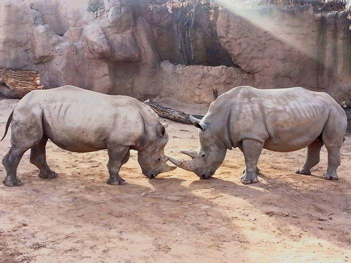 Rino Rinocerontes First Eyeem Photo