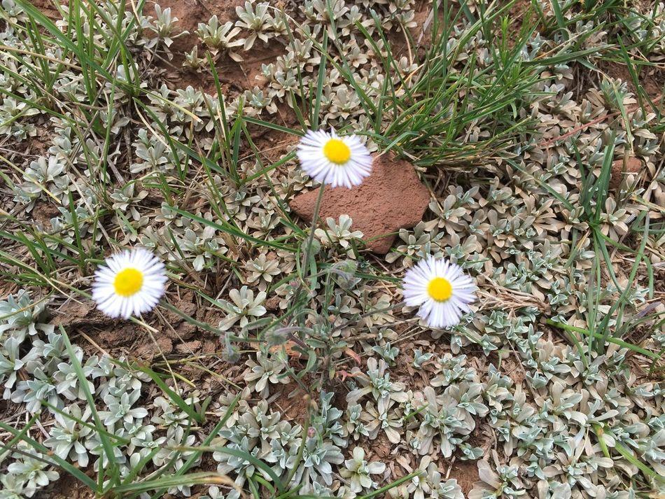 Flagstaff Arizona trip. Flagstaff Gardens Flagstaff Mountain Flagstaff, Az Flagstaffarizona Flagstaffbluesnbrews Grass Green Landscape_Collection Landscape_photography My Favorite Photo My Favorite Place