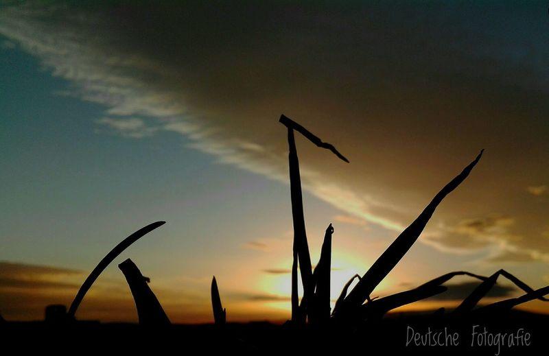 Silhouette Sky Sunset Nature Cloud - Sky Dramatic Sky Beauty In Nature Germany🇩🇪 Berlin Algeria Bbacity Love First Eyeem Photo