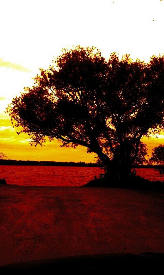 Sunset Nature Beautiful Trees Red Hello World Tree At Dusk