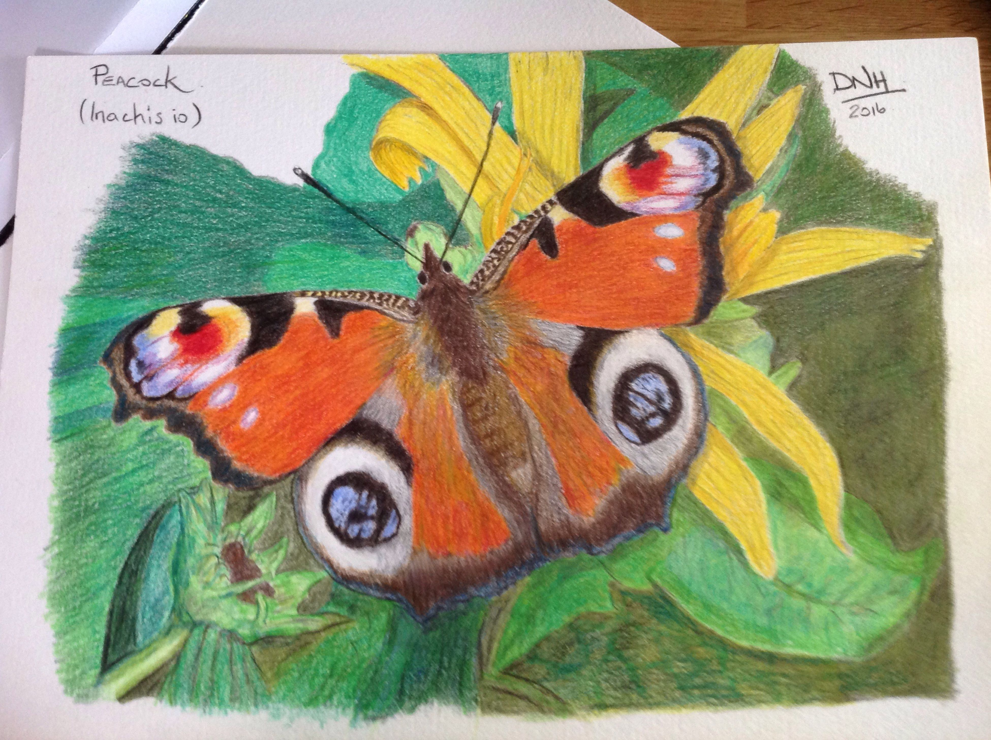 close-up, no people, butterfly - insect, multi colored, animal markings, day, orange color, nature, focus on foreground, natural pattern, green color
