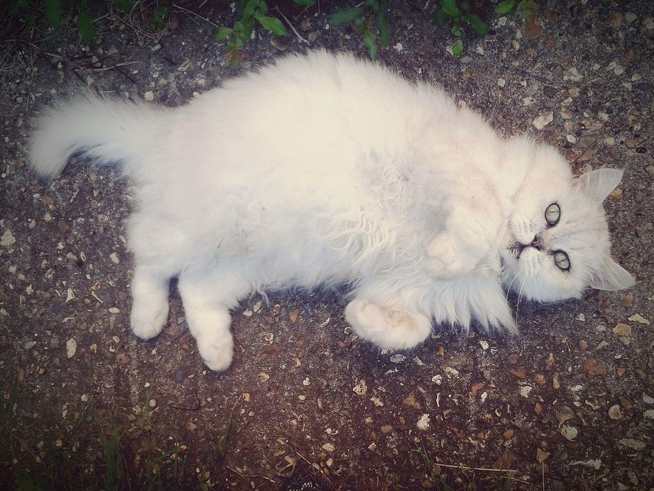 My Cat Freddie Pet
