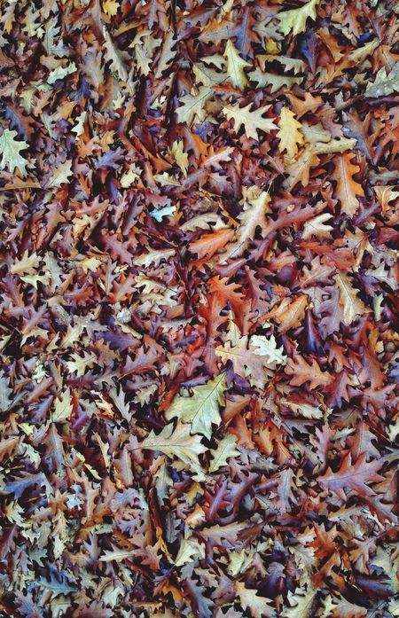 Fall_collection Autumn Leafs Where Does The Time Go? Beauty In Ordinary Things Urban Camouflage Things On The Floor