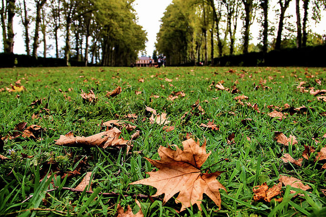 fallen dry leaves on the green grass Autumn Autumn Leaves Beauty In Nature Day Fall Beauty Fall Leaves Grass Green Color Growth Horizontal Leaf Leaf Fall Nature No People Outdoors Prospect Park Tranquility Tree