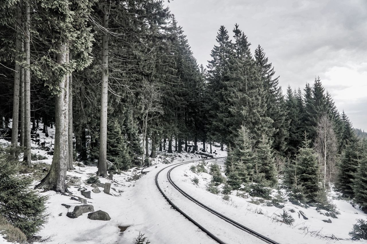 Tree Cold Temperature Winter Snow Nature The Way Forward Weather Beauty In Nature Nature Harz National Park Transportation Day Growth Tranquility Road Scenics Outdoors Landscape No People Forest Sky