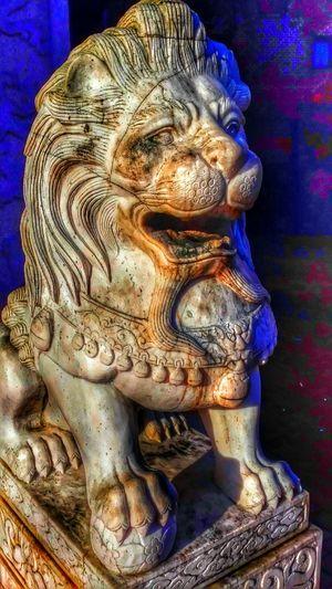 Statue Groningen Lion Myfuckinggroningen