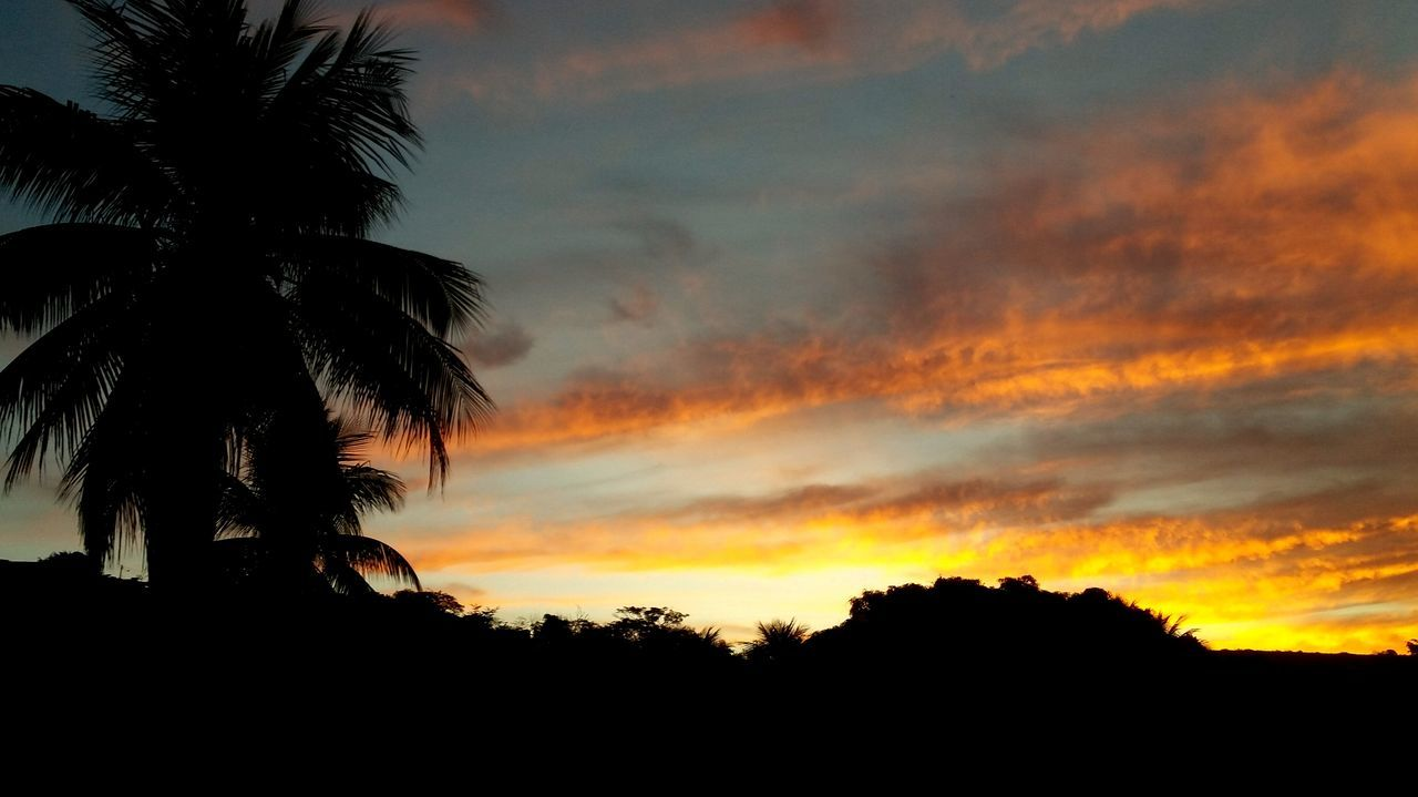 sunset, palm tree, silhouette, tree, sky, beauty in nature, nature, scenics, cloud - sky, tranquil scene, tranquility, no people, growth, low angle view, outdoors, tree trunk, day