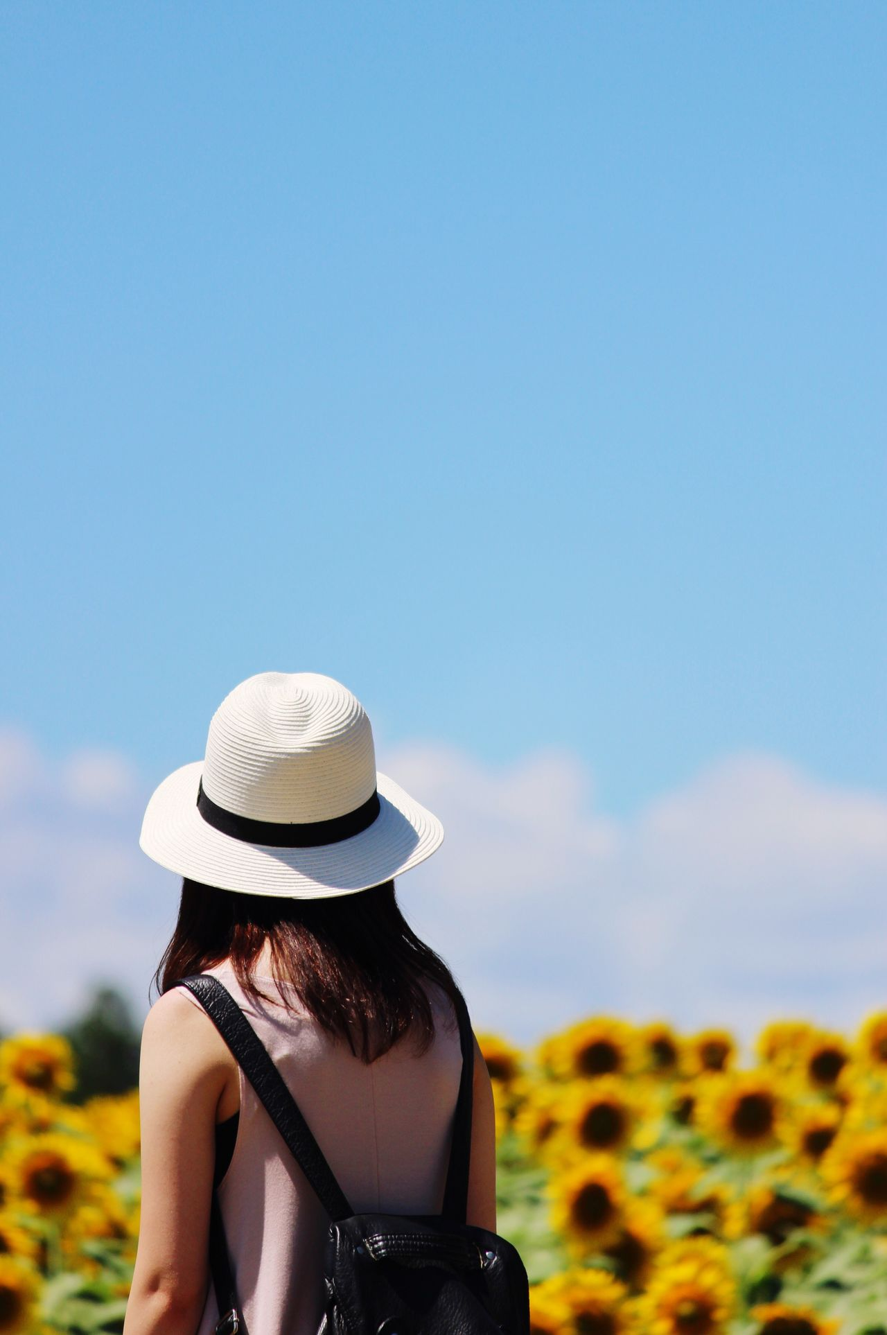 Beautiful stock photos of sunflower, Backpack, Beauty In Nature, Blue, Casual Clothing