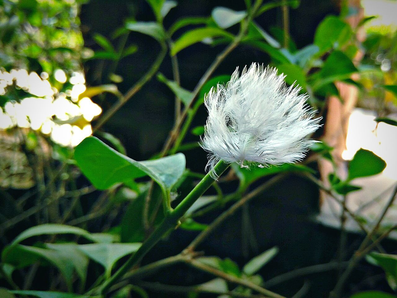 Clear Flower Beautiful Only One Stand Alone Greenlife Green Color White Flower Whiteflowers Randomphotography Natural Beauty Nature_collection Landscape_collection EyeEmNatureLover Simple Elegance