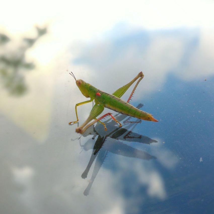 Glasshopper Grasshopper Glasshopper Bluesky Skywalk First Eyeem Photo