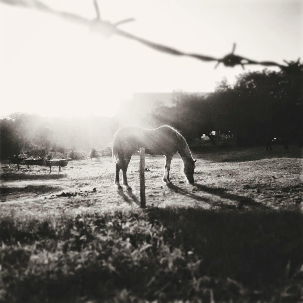 Countryside Horse,sun First Eyeem Photo
