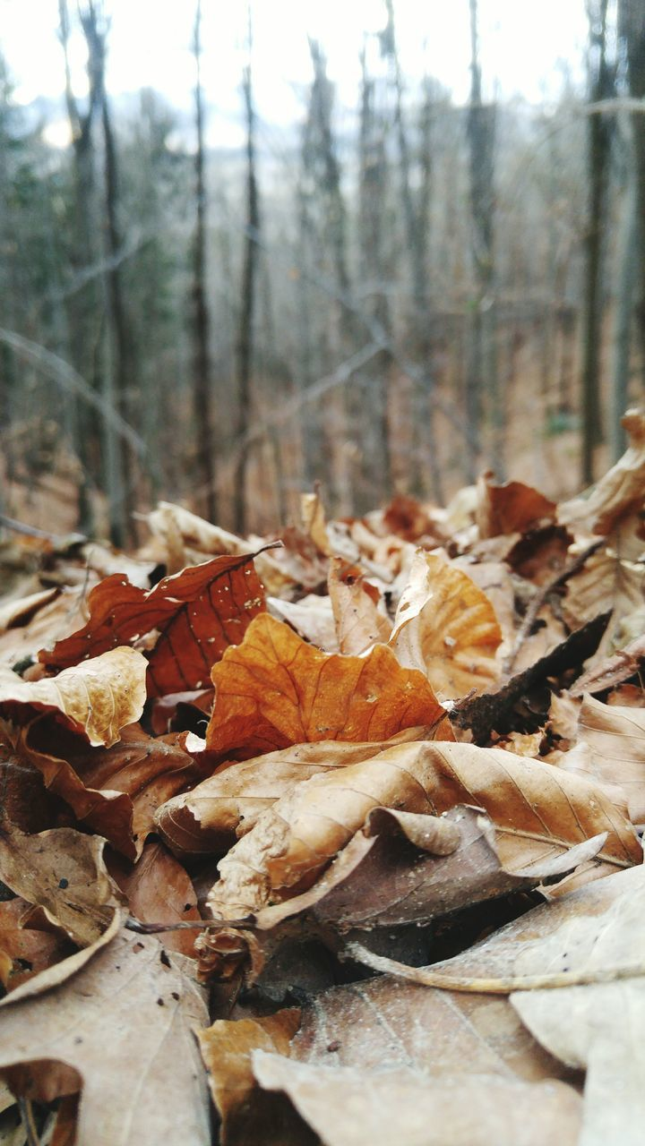 change, autumn, dry, leaf, nature, no people, day, forest, outdoors, focus on foreground, fragility, beauty in nature, close-up, tree