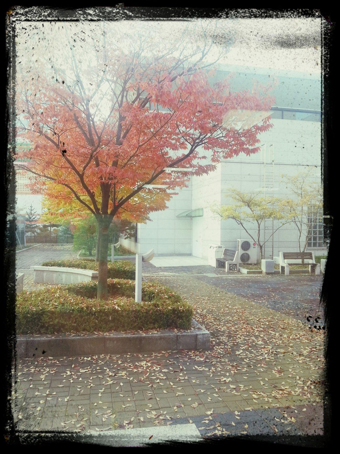Autumn Colors Tree Photo Nature