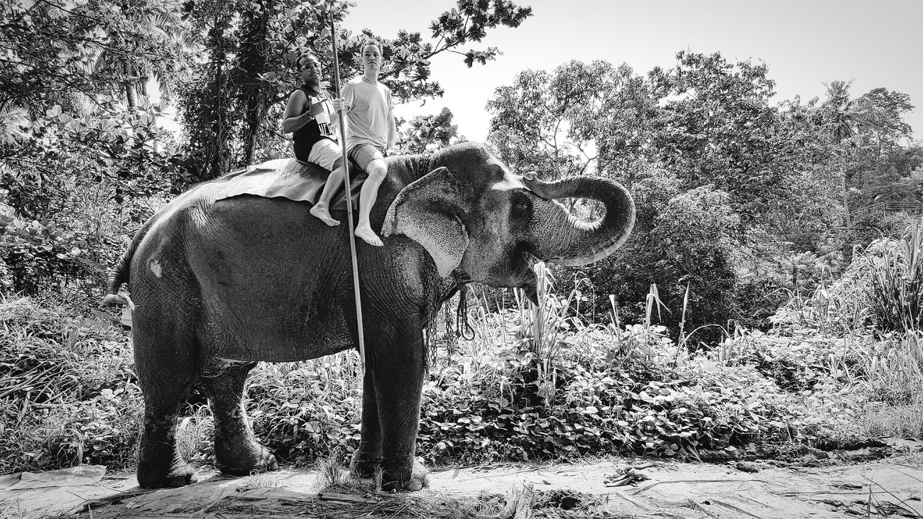 Service Animals Aroundtheworld EyeEm Gallery Taking Photos Eye4photography  The Week Of Eyeem Eyeem Black And White Elephants Thats Me! Elephant Ride