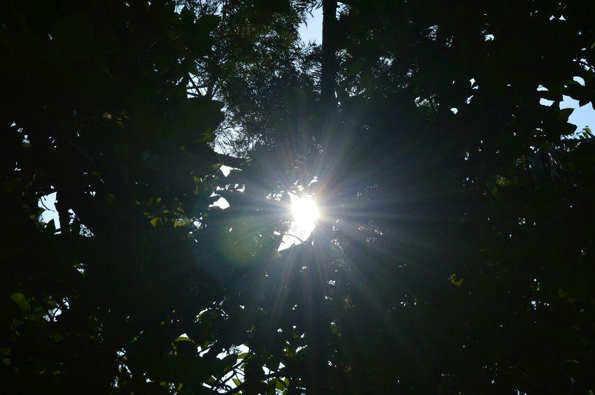 Hope Lightofhope Light Sunlight Sunshining EyeEm