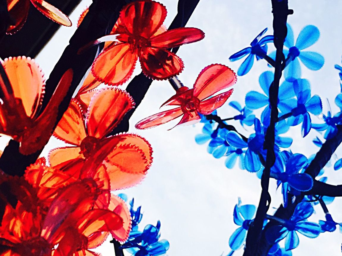 Flowers. Plastic Flower Plastic Plasticfantastic Red And Blue Colour Of Life