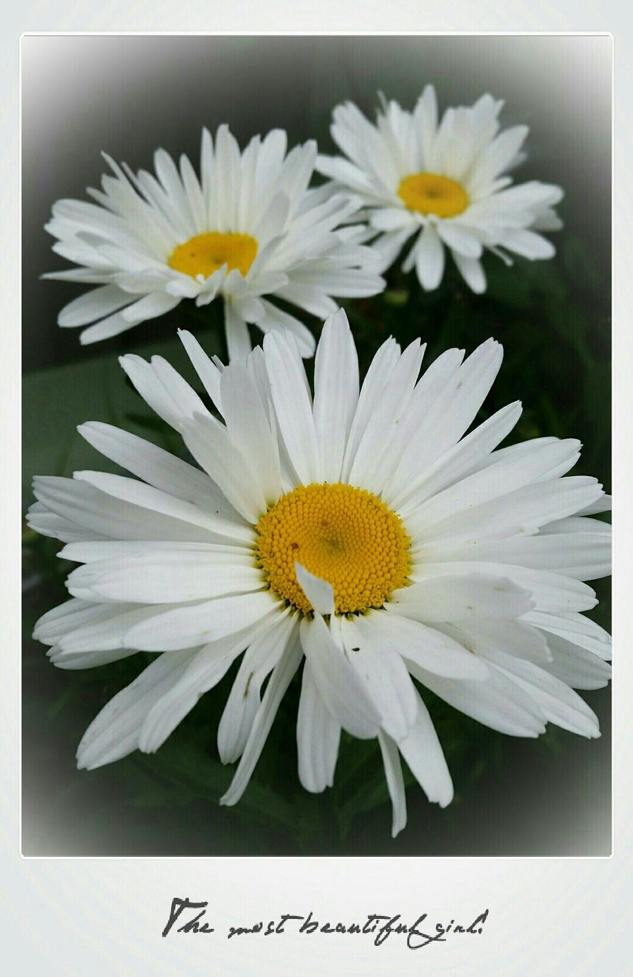 Photo Des Fleurs Relaxing