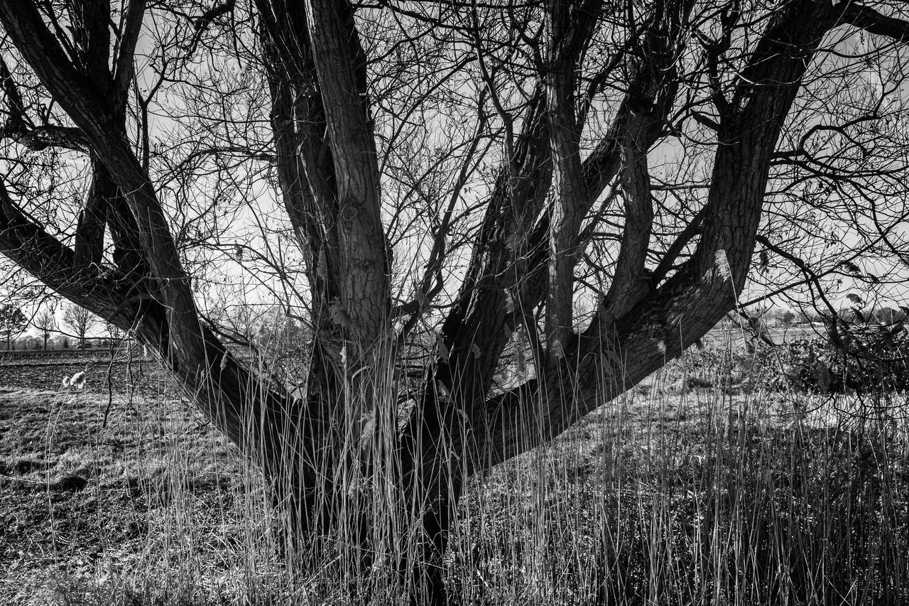 Schilfgras Bare Tree Beauty In Nature Black & White Black And White Branch Day Forest Grass Growth Landscape Nature No People Outdoors Reed Grass Sky Tree Tree Trunk