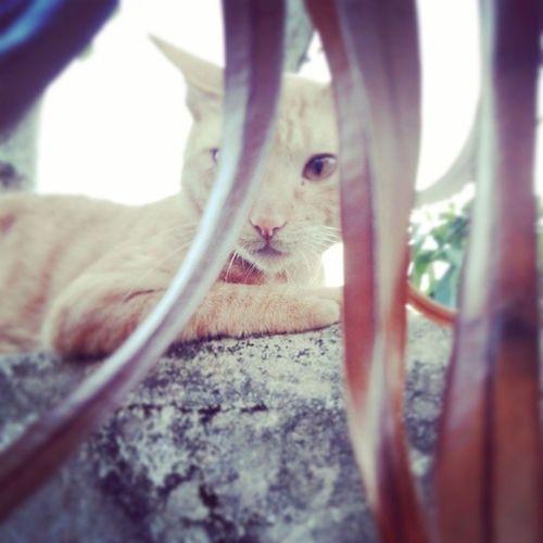 Yellowcat DarwinTheCat Bluesky Likecats yelloweyes