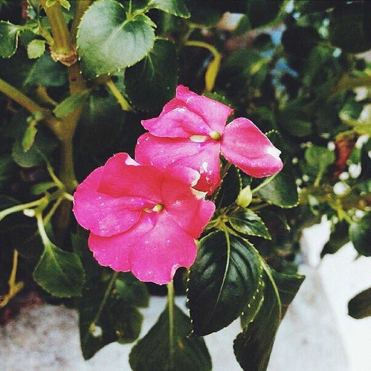 ▪ Vscocam ▪ Vscofeatures ▪ Vscogaleria ▪ Bestofvsco ▪ vscodaily ▪ vscovibe ▪ vsco ▪ vscophile ▪ flowers ▪ vscobrasil ▪
