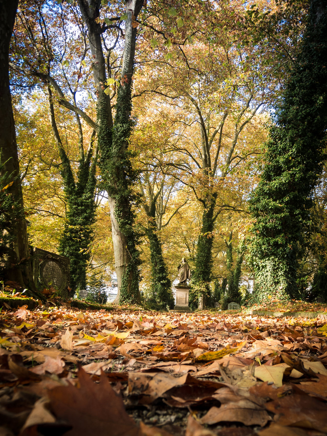 Autumn Beauty In Nature Day Graveyard Beauty Growth Leaf Nature No People Outdoors Scenics Tranquility Tree Trees
