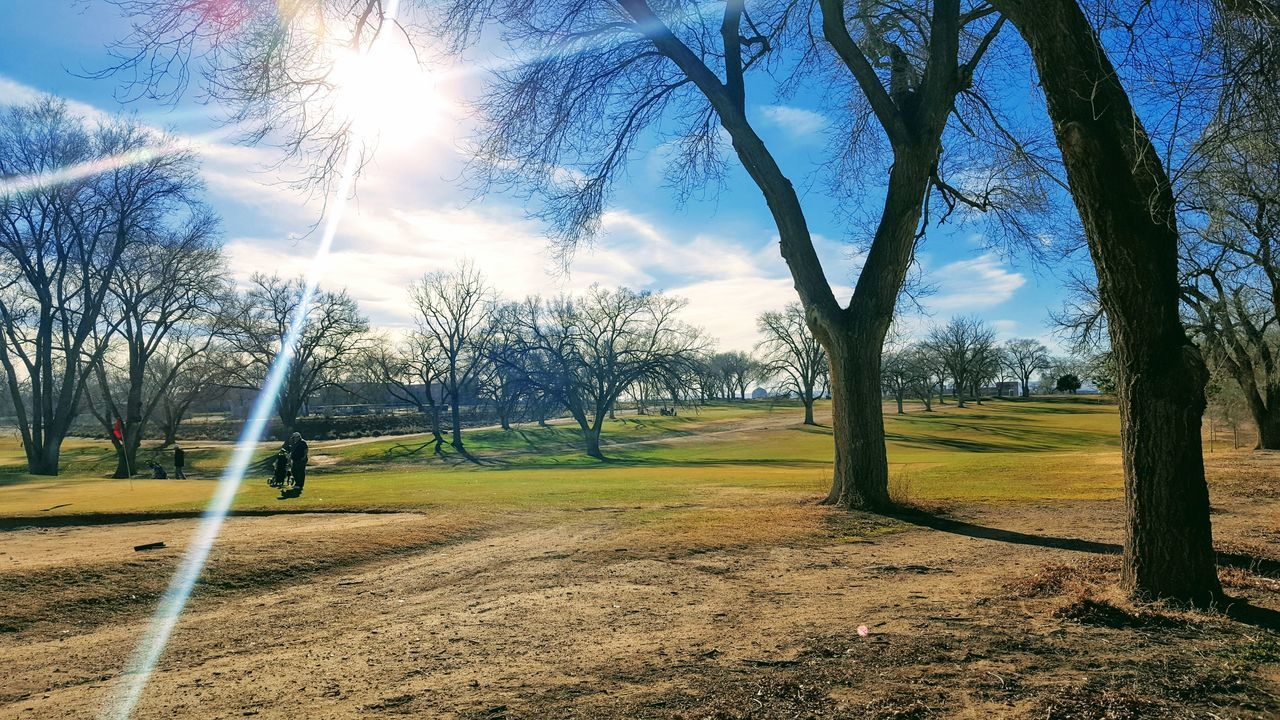 tree, tranquility, tranquil scene, beauty in nature, nature, sky, grass, landscape, scenics, field, sunlight, day, bare tree, outdoors, no people, growth, golf course, golf, branch