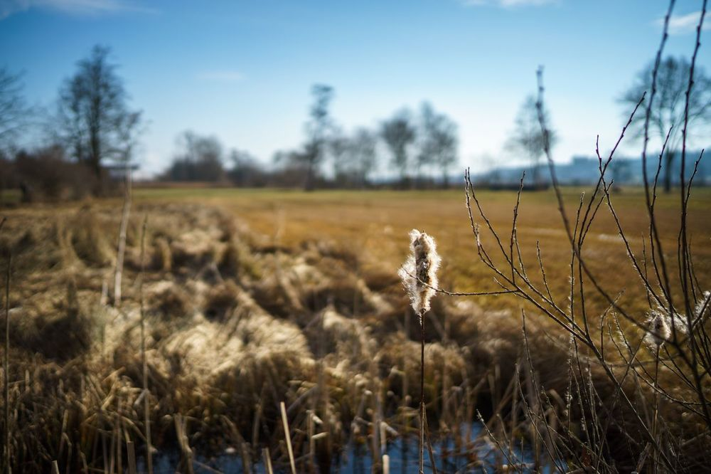 Field Tree Nature Tranquility Sky No People Growth Landscape Day Outdoors Grass Beauty In Nature Wooly Depth Of Field
