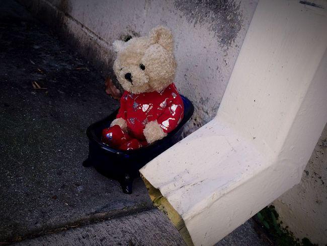 Teddy Bear Teddybear Teddy Bears Christmastime Random Garbage Drain Water Drain