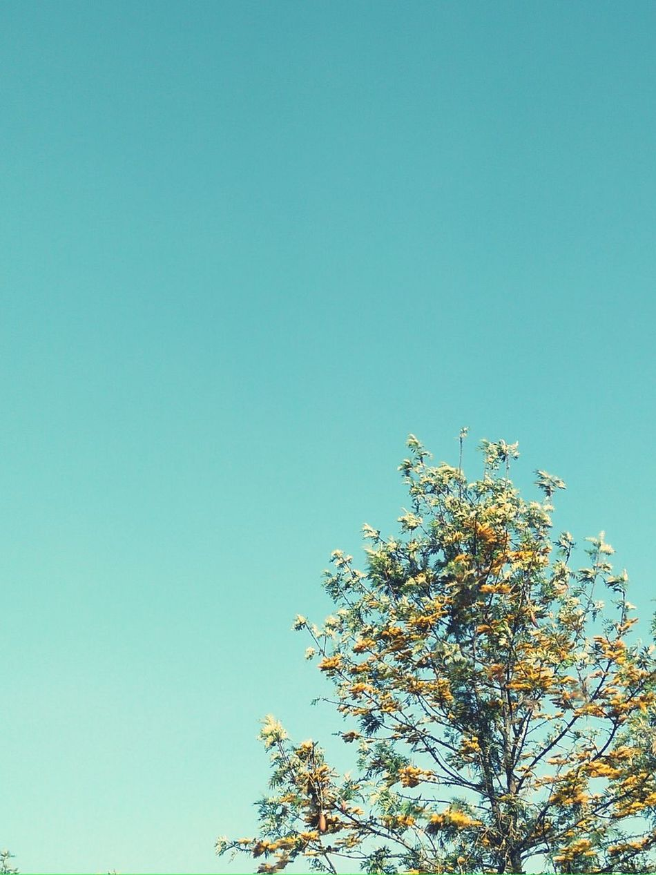 Tree Sky Blue Clear Sky Day Flower Awesome_view