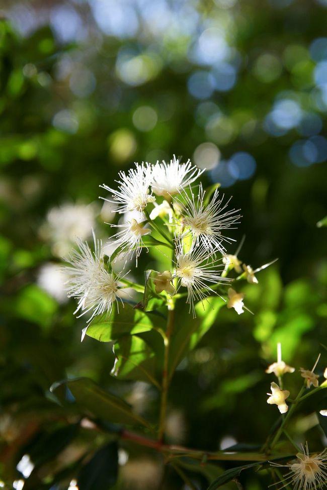 Flower and bokeh Flowers Tree Nature Sunshine Petals Leafs Bokeh Bokehlicious Sunny Day Caversham Wildlife & Nature